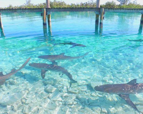 shark1-00003